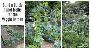 cattle panel trellis how to build a
