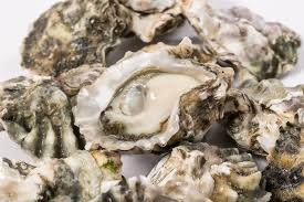wild amoto oysters