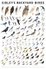 Backyard Bird Identification Oregon Kids Guide To Birds