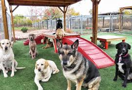 Dogs are separated by size, temperament and play style. Buy One Get One Free Dog Day Care Beds N Biscuits