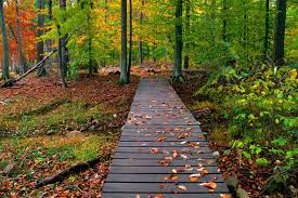Autumn Nature Way To Forest Wallpaper ...