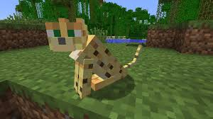 tame baby ocelot minecraft. Fine Tame Ocelotminecraft121416 On Tame Baby Ocelot Minecraft
