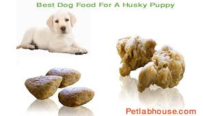 10 Best Dog Food For A Husky Puppy Reviews With Buyers