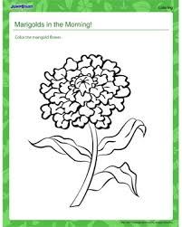 marigolds in the morning plants coloring pages for kids  marigolds in the morning