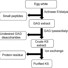 Purification And Analytical Flow Chart Used For Chicken Egg