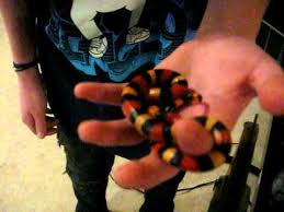 milk snake size pueblan milk snake care youtube
