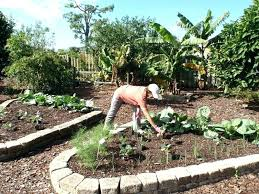 florida vegetable gardening guide south garden tours travel logs landscaping ideas gardens and