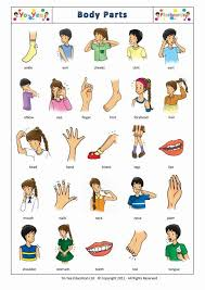 Body Part Chart For Toddlers Pin On Language Activities