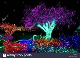 Defiance Zoo Lights A Tree Lit Up For Zoolights At The Point Defiance Zoo In