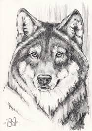 gray wolf drawing colored. Simple Colored Gray Wolf Drawing Colored  Photo4 And Wolf Drawing Colored E
