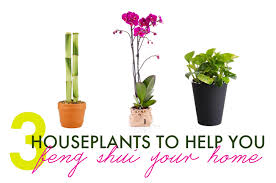 plants feng shui home layout plants. 3 Houseplants To Help You Feng Shui Your Home Plants Layout E