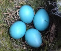 Bird Egg Identifier Gardenbird