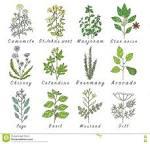 Essay on herbal plants