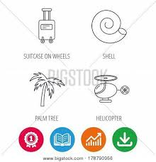 Download Palm Chart Palm Tree Shell Vector Photo Free Trial Bigstock