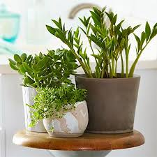 Best Plants For Bathrooms Home Dzine Garden Ideas Use Plants To Freshen Up  A Bathroom Small