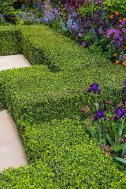 A Clipped Hedge Of Buxus Sempervirens