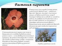 Реферат на тему растения паразиты класс ПОГОДА ЦОМ Реферат насекомые xreferat com банк рефератов