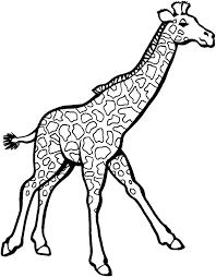 Giraffe Colouring Hashtag Bg