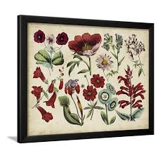 Antique Botanical Chart I Framed Print Wall Art
