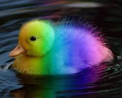 rainbow animal wallpaper. Delighful Wallpaper Rainbow Home  Animals Rainbow To Animal Wallpaper A