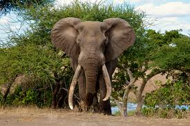 Risultati immagini per mpumalanga game reserve