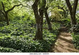 allerton garden reviews. pathway in allerton garden, part of national botanical garden near poipu; kauai, hawaii reviews