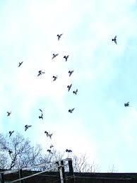 birds flying in the sky tumblr. Brilliant Tumblr Colorful Birds Flying Tumblr Wwwpixsharkcom Images In The Sky L