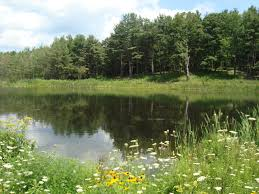 Pond Pond Supplies In Rochester New York By National Pond Service