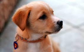 beautiful cute dog high resolution wallpaper desktop background dog pictures pets best friend free 2560 1600 wallpaper hd