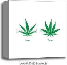 Sativa And Indica Chart Sativa And Indica Canvas Print