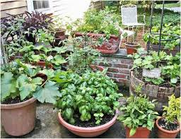florida vegetable gardening. Container Vegetable Gardening Florida Inspirational 5 Easy To Grow Ve Ables V