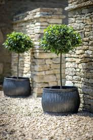 Large plastic planters Bamboo Garden Urns For Sale Large Plastic Planters Uk Umschulden24club Garden Urns For Sale Large Plastic Planters Uk Serendipitaliainfo