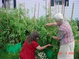 Container Garden Vegetables  Gardening IdeasContainer Garden Ideas Vegetables