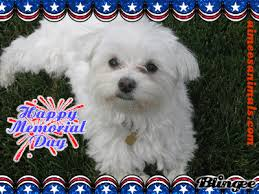 Image result for memorial day pics with dogs