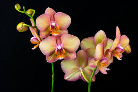 multicolor orchid flower