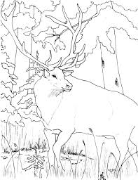 Small Picture Elk coloring Free Animal coloring pages sheets Elk