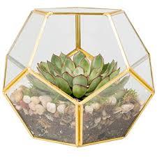 deco glass terrarium succulent air plant sphere