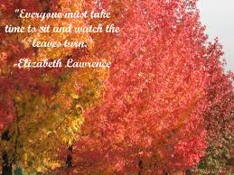 leaves autumn colors with quote