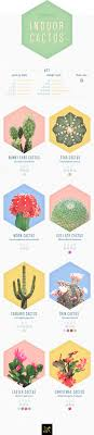 14 Types Of Cactus For Your Home And Garden Ftd Com