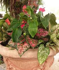 Small Picture Use Tropical Shade Plants in Your Garden Costa Farms