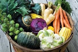 best garden vegetables. fall garden vegetables - autumn produce best n
