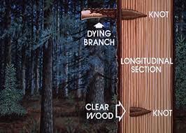 two basic types of wood