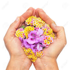 Image result for flowers from hands images