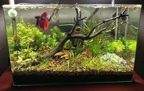 betta fish 5 gallon tank setup decorating ideas