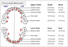 Children S Tooth Chart Letters Primary Teeth Chart Baby Tooth Eruption Chart Dental