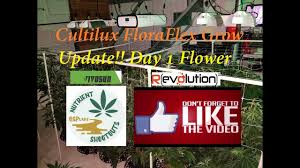 Floraflex Nutrients Feed Chart Cultilux Floraflex Grow Update Day 1 Flower Youtube