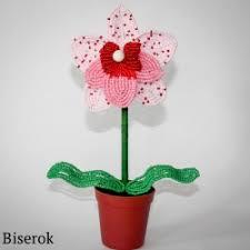 Орхидея – Бисерок