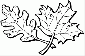 Small Picture impressive maple leaf coloring page with leaf coloring pages