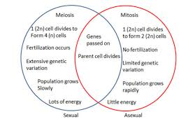 Venn Diagram Comparing Meiosis And Mitosis Difference Between Sexual And Asexual Reproduction