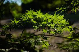 Wallpaper : Japan, sunlight, forest, nature, grass, branch, green, jungle,  Leica, Tokyo, rainforest, Jp, light, autumn, leaf, flower, flora,  vegetation, ...